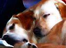 Trooper & Rosie .... too tired! by Brenda Boisvert