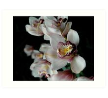 White Orchid with a tinge of Yellow Art Print