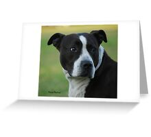 American Staffordshire Bull Terrier Greeting Card
