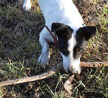 big stick~little dog by spiritofthebush