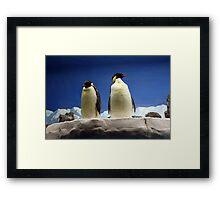 Emperor Penguins Framed Print
