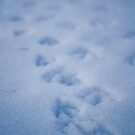 Duck Prints In The Snow by Kgphotographics