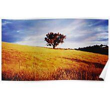 Sunset at our old Vineyard - Strathewen Vic Poster