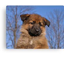 Sable Puppy Canvas Print