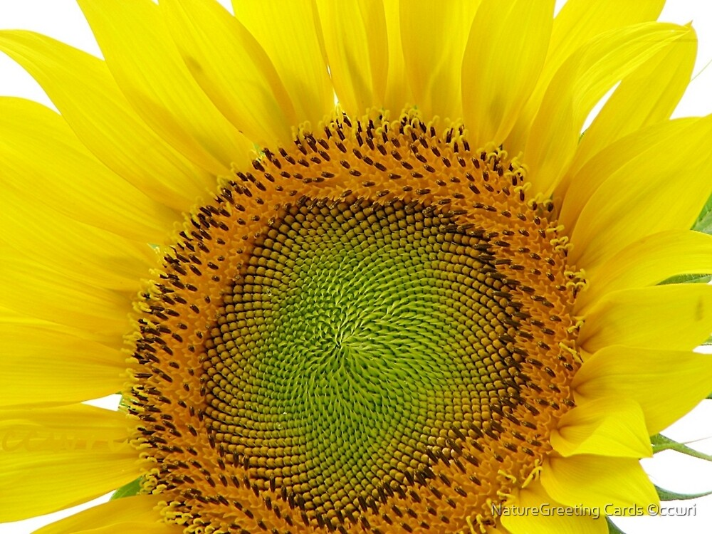 Always On The Sunny Side by NatureGreeting Cards ©ccwri
