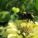 Pollen Hunter by shutterbug2010