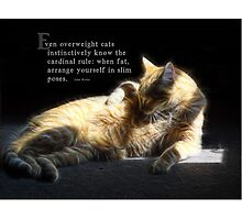 Overweight cats-saying Photographic Print