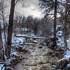 After the Winter Storm by Diana Graves Photography