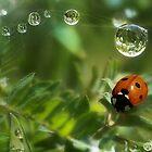 Ladybug by sunshine65