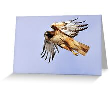 Redtailed Hawk - Flight Greeting Card