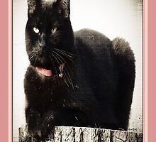 Black Cat for Everyday by Terri Chandler