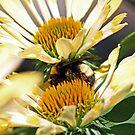 Sandwiched Bumblebee (horizontal) by Bonnie Robert