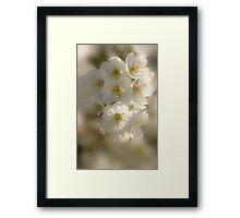 Fragrance In White_2 Framed Print