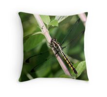 Female Great Blue Skimmer (immature) Throw Pillow