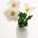three white anemones in vase by OldaSimek