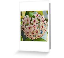 Hoya Carnosa Greeting Card