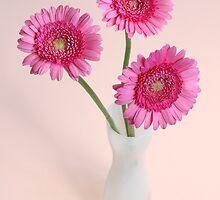 three pink gerberas in white vase by OldaSimek