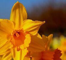 Good Morning Spring by Wrayzo