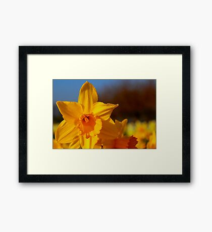Good Morning Spring Framed Print