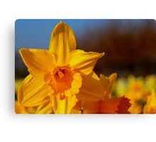 Good Morning Spring Canvas Print