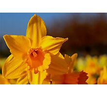 Good Morning Spring Photographic Print