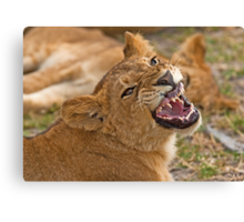 Getting angry... Canvas Print