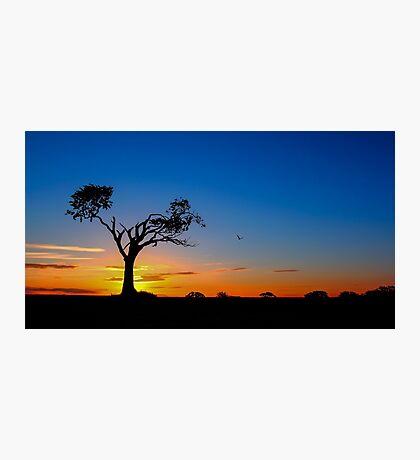Zip-A-Tree-Doo-Dah Photographic Print