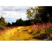 Willow Herb Photographic Print