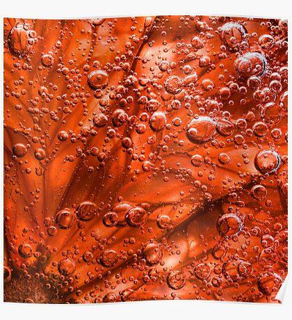 Blood Grapefruit in fizzy water Poster