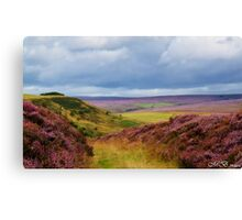 Heather covered Hills Canvas Print