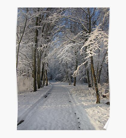 Snowy Woodland Scene Poster