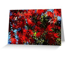 Maple In Bloom Greeting Card