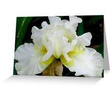 White Bearded Iris Greeting Card