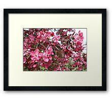 Crabapple Blossoms Framed Print