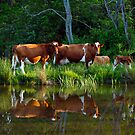 The Herd by BigD