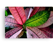 Colorful Abstract Botantical Leaves Photography Canvas Print
