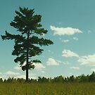 Lonely Tree by Christopher Clark