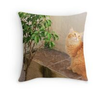 The Seventh Cat at Guanabara Bay Throw Pillow