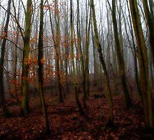 Woodland ortonised by naranzaria