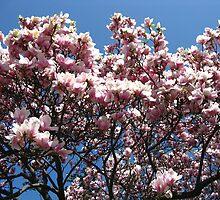 Magnolia The Third by artwhiz47