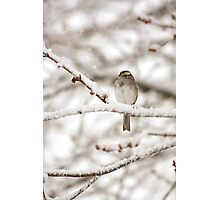 A Bird in the Tree Photographic Print