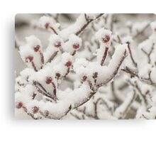 Dressed in Snow Canvas Print