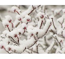 Dressed in Snow Photographic Print