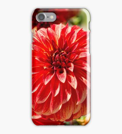 Front And Center iPhone Case/Skin