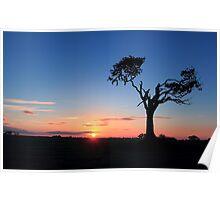 Sunrise...Just Waking Up Poster