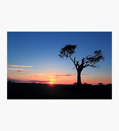 Sunrise...Just Waking Up Photographic Print