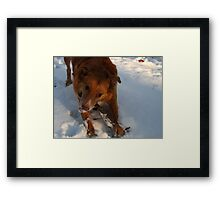 Snow Happy Framed Print