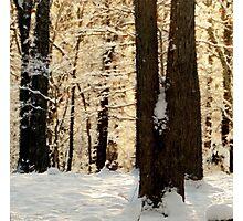 Frosty WinterRise Photographic Print