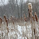 Cat Tails by Casey Voss