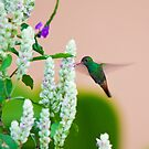 Hummingbird (vertical) In Costa Rica by Tracy Riddell